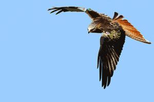 kite10_cutout_600