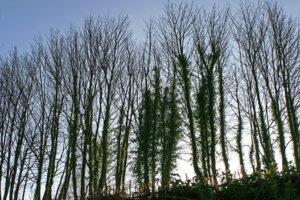 trees_600